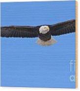 Bald Eagle 3768 Wood Print