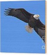 Bald Eagle 3772 Wood Print