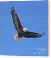 Bald Eagle 3773 Wood Print