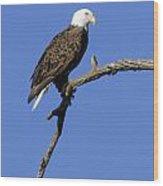 Bald Eagle 4 Wood Print