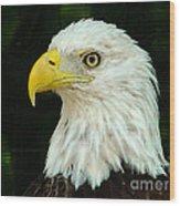 Bald Eagle-42 Wood Print