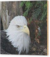 Bald Eagle #3 Wood Print