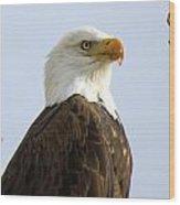 Bald Eagle-a Wood Print