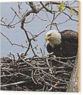 Bald Eagle And Eaglet Wood Print