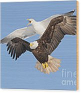 Bald Eagle And Greater Black-backed Gull Wood Print