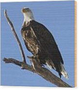 Bald Eagle Ascent 1 Wood Print