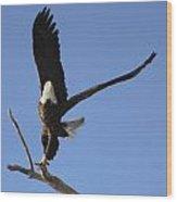 Bald Eagle Ascent 2 Wood Print