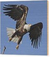 Bald Eagle Ascent 4 Wood Print
