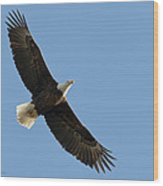 Bald Eagle At Bridger Mt Wood Print