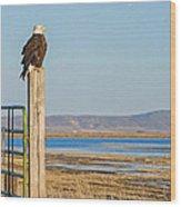 Bald Eagle At Lower Klamath National Wildlife Refuge Wood Print