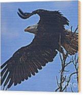 Bald Eagle At Take Off   #6109 Wood Print