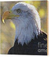 Bald Eagle Beauty Wood Print