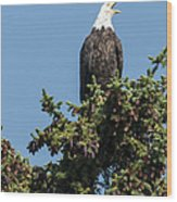 Bald Eagle Wood Print