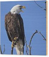 Bald Eagle Calling Wood Print