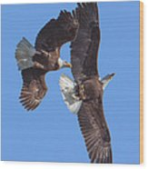 Bald Eagle Chase Over Pohick Bay Drb148 Wood Print