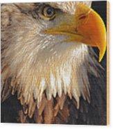 Bald Eagle Close-up Wood Print