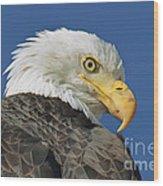 Bald Eagle Closeup Wood Print