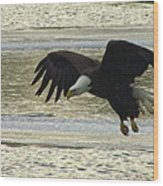 Bald Eagle Coming In For Landing Wood Print by Mitch Spillane