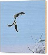 Bald Eagle Courtship Ritual  1331 Wood Print