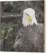 Bald Eagle Wood Print by Dawn Gari