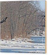 Bald Eagle Fledgling Near Ludwig Mill 2576 Wood Print