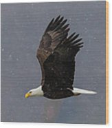 Bald Eagle Flight In Snow Wood Print
