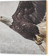 Bald Eagle Fly By Wood Print