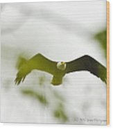 Bald Eagle Flying To Perch Wood Print