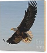 Bald Eagle Flying With Fish In Its Talons Wood Print by Stephen J Krasemann