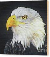 Bald Eagle Hailaeetus Leucocephalus Wildlife Rescue Wood Print