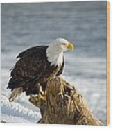 Bald Eagle Homer Spit Alaska Wood Print