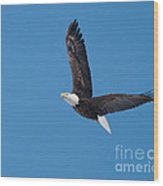 Bald Eagle In Flight 2 Wood Print