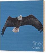 Bald Eagle In Flight 4 Wood Print