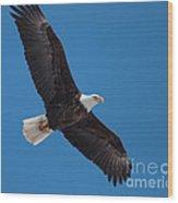 Bald Eagle In Flight 5 Wood Print