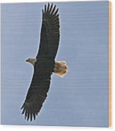 Bald Eagle In Sandspit Bc Wood Print