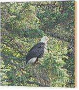 Bald Eagle Wood Print by Jennifer Kimberly