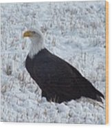 Bald Eagle  Wood Print by Kimberly Maiden