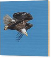 Bald Eagle Launches Into The Clear Sky Wood Print