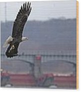 Bald Eagle Leaves With Fish At Lock And Dam 14 Wood Print