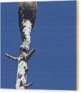 Bald Eagle On A Perch   #2698 Wood Print