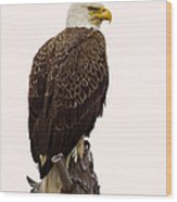 Bald Eagle On A Snag Wood Print