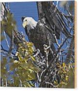 Bald Eagle On Nest Near The Oxbow Wood Print