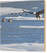 Bald Eagle Over Maumee River 2456 Wood Print
