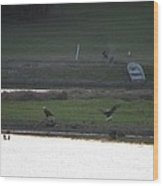 Bald Eagle Pair With Turkey Strutting Wood Print