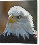 Bald Eagle Pose Wood Print