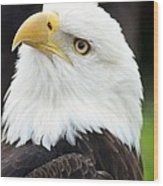 Bald Eagle - Power And Poise 01 Wood Print