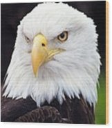 Bald Eagle - Power And Poise 02 Wood Print
