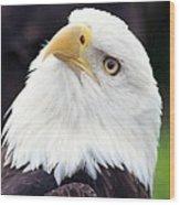 Bald Eagle - Power And Poise 03 Wood Print