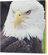 Bald Eagle - Power And Poise 04 Wood Print