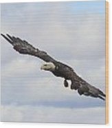 Bald Eagle Release 1 Wood Print